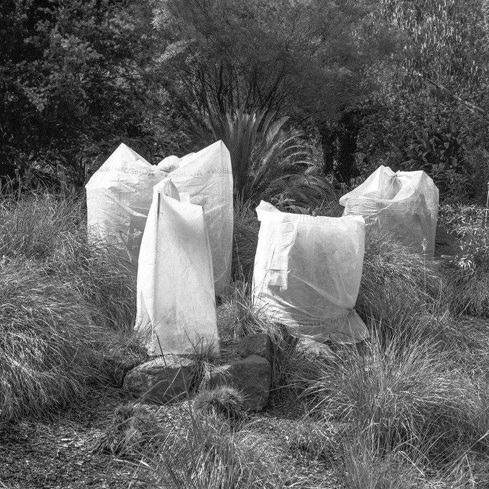 Bags, Berkeley Botanical Gardens, CA, USA 2018