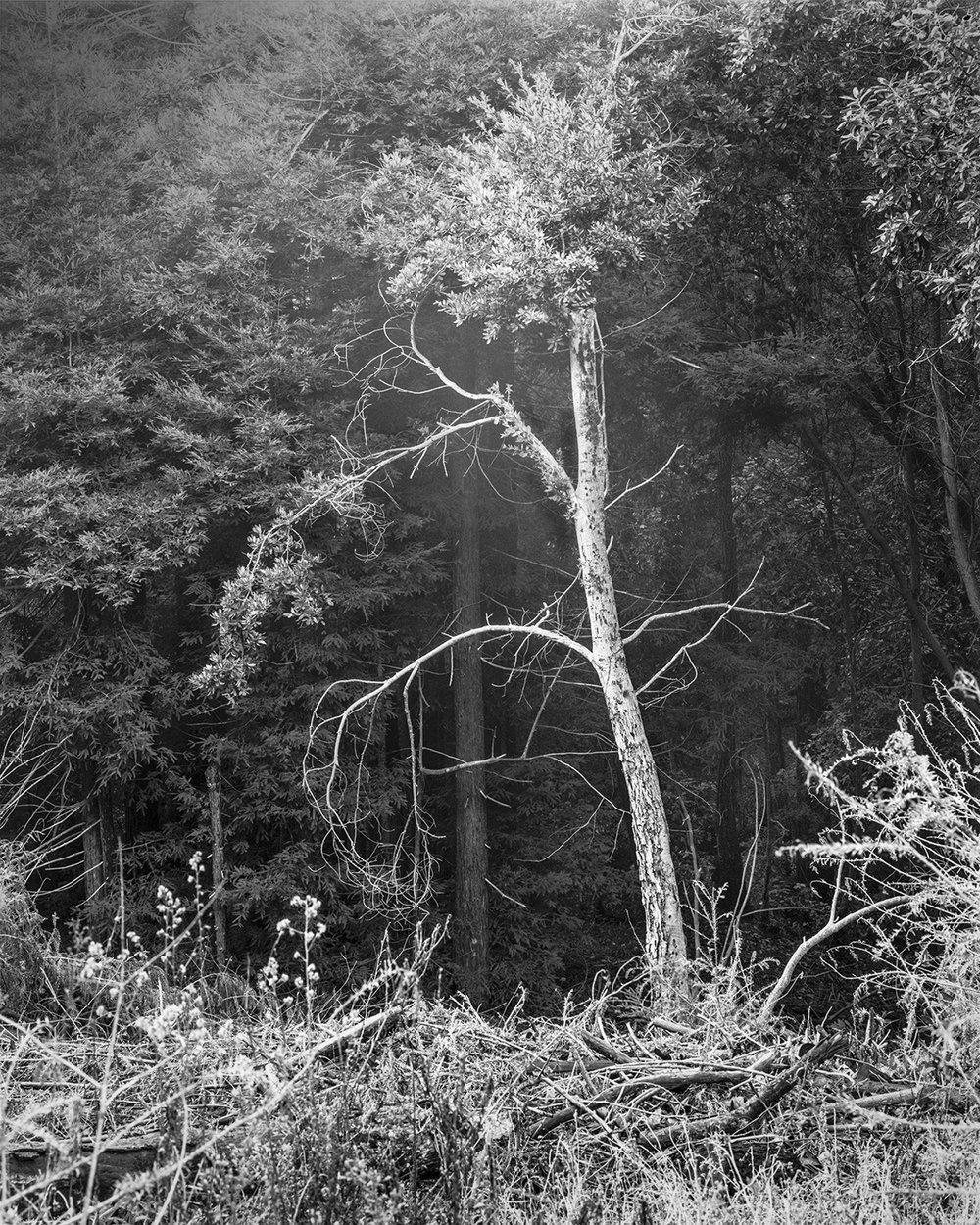 Dead Tree, San Francisco, CA 2017