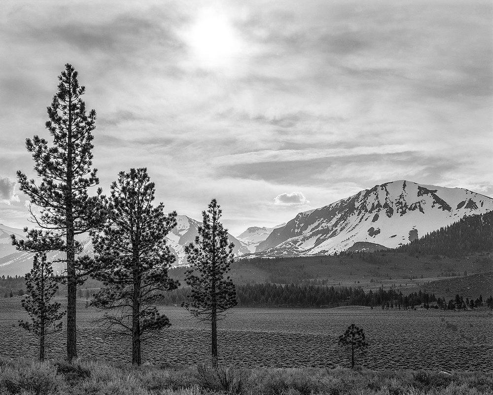 Five Trees, Reversed Peak, CA 2017