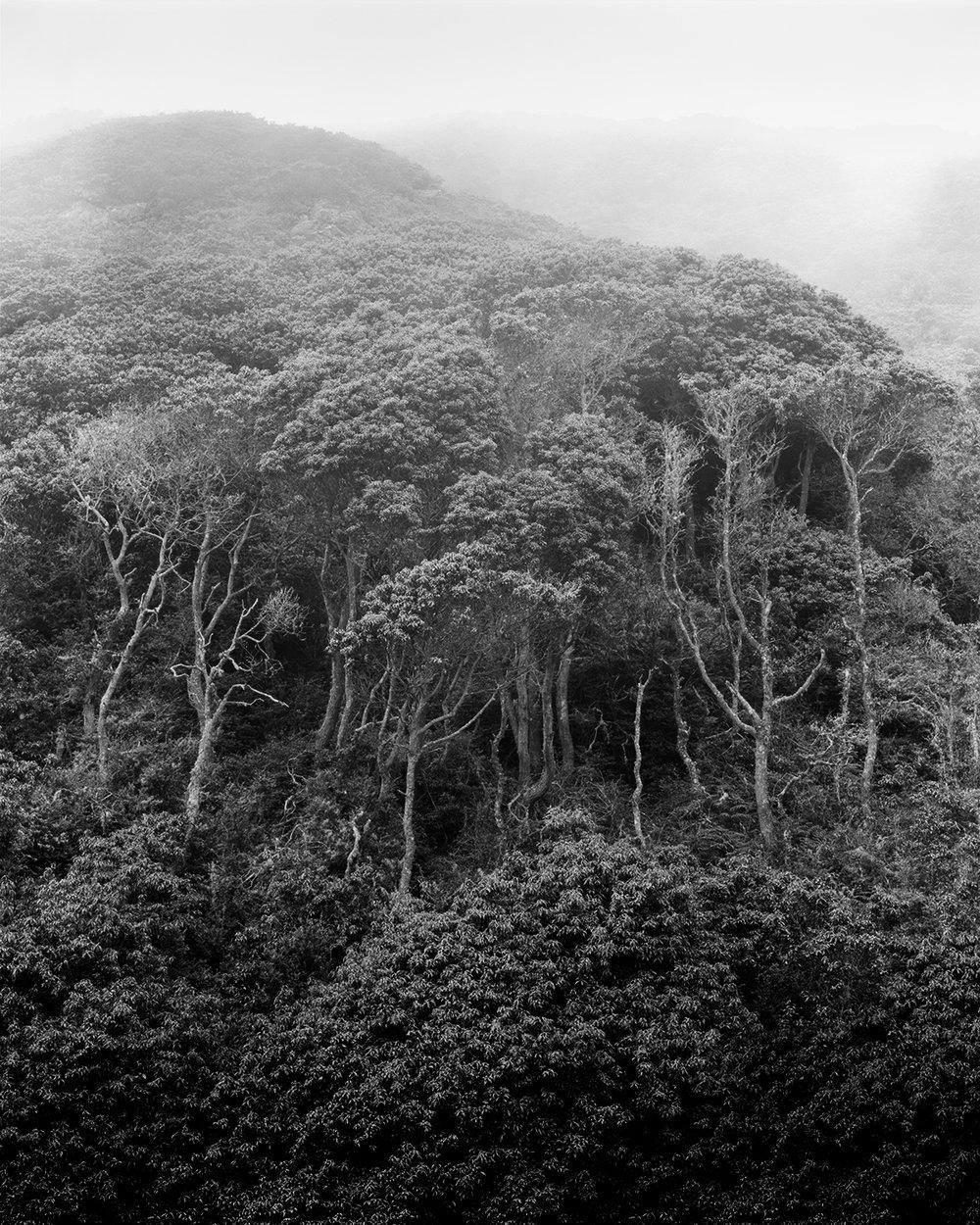 Wicked Trees, Montara Mountain 2016
