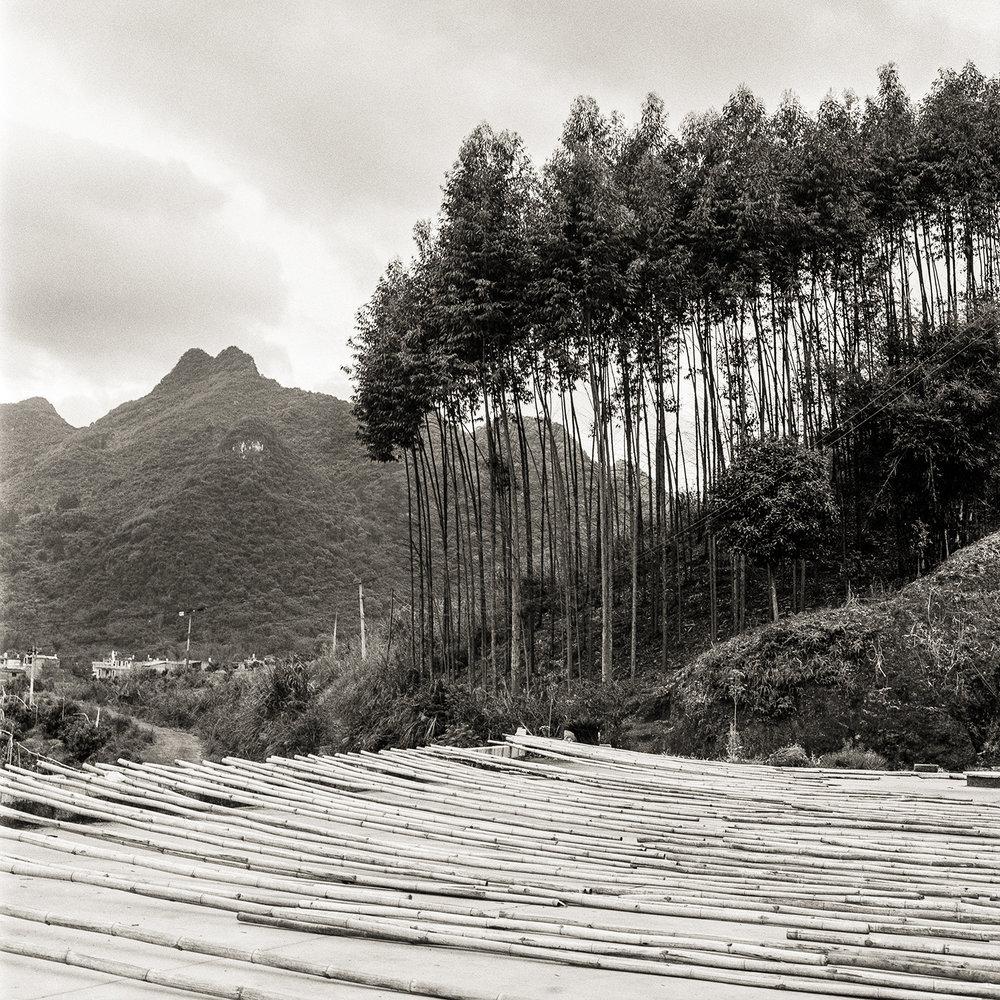 Harvesting Trees, China, 2018