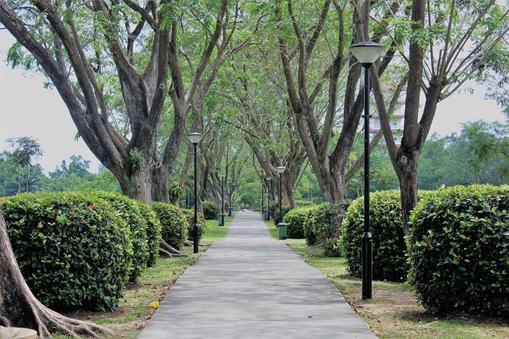 Pathway to Chinese Gardens