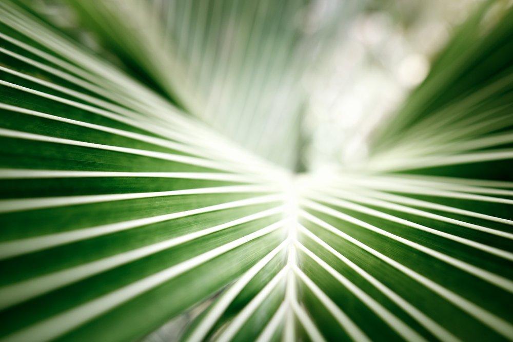 coconut-leaf-2232077_1920.jpg