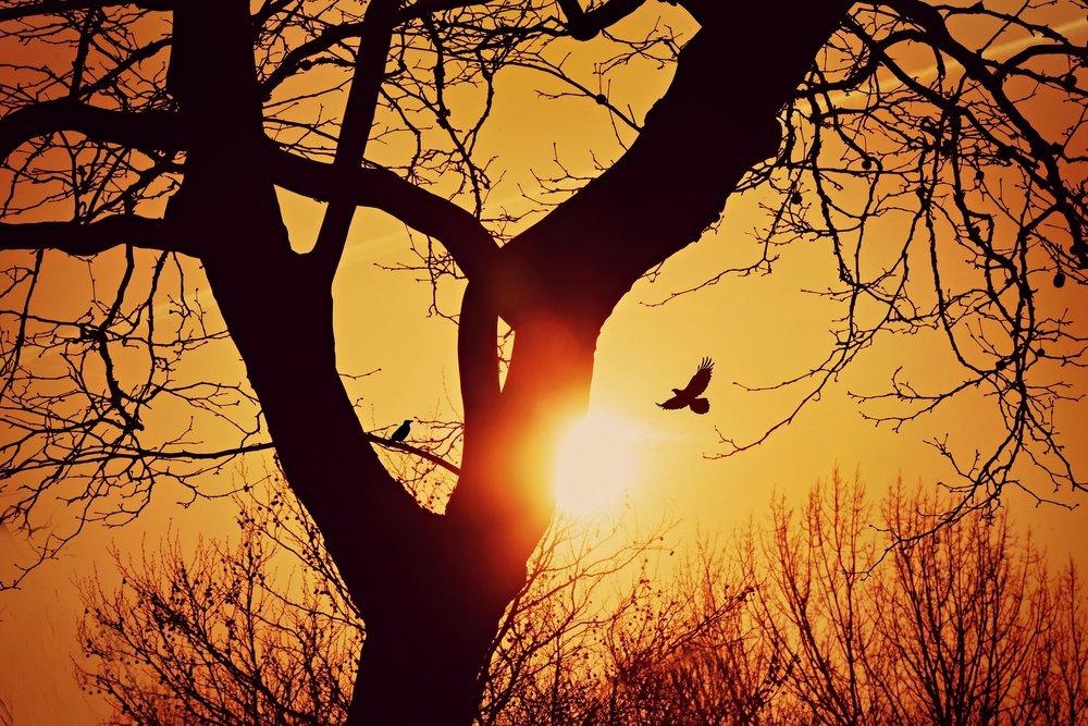 tree-4079083_1920.jpg