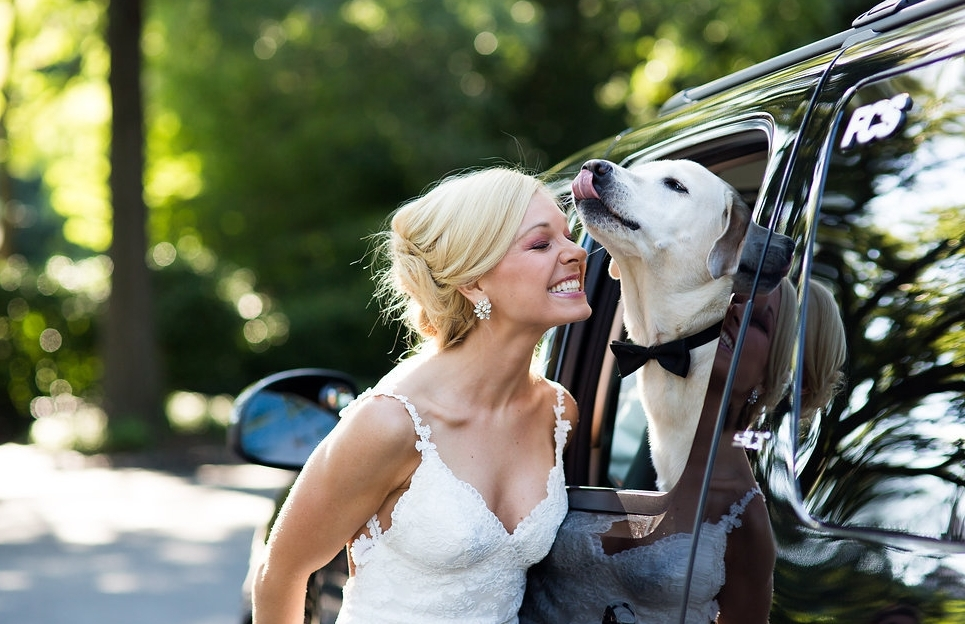 @SirBaxterBear Licking Mama Anna Kooiman on Wedding Day