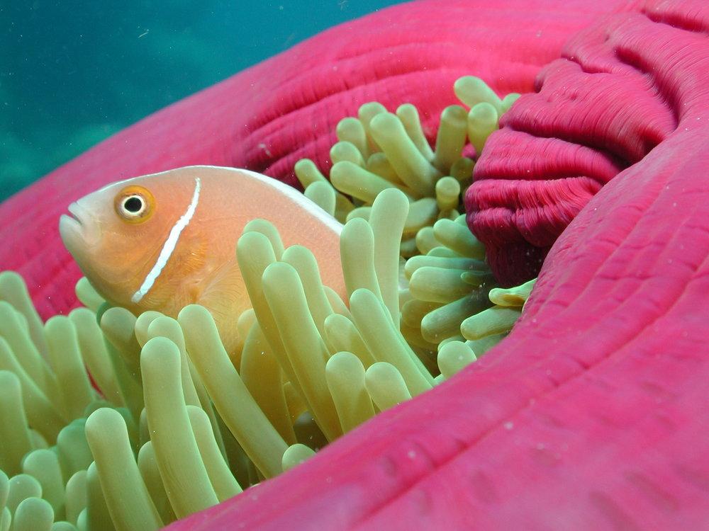 Anna Kooiman AnnaKooiman.com fitness travel lifestyle Great Barrier Reef Australia Queensland Cairns Photo Calypso