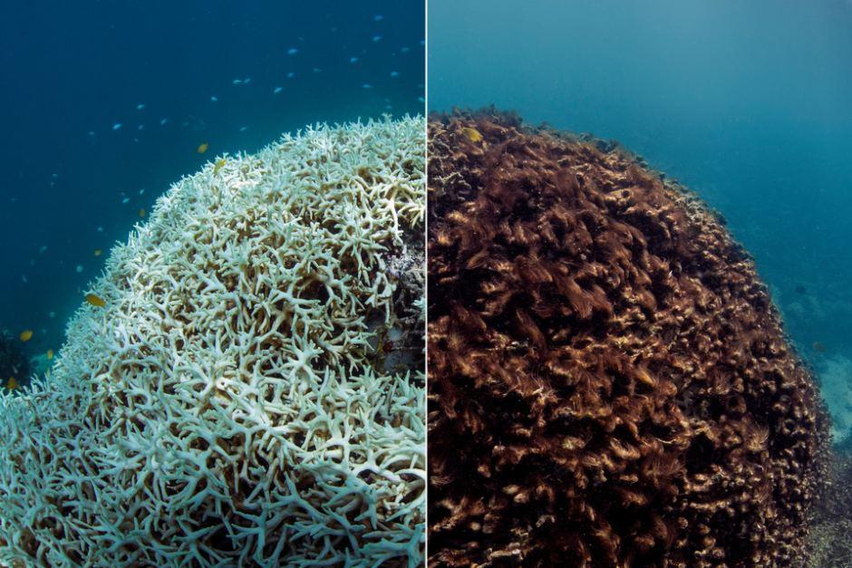 Coral Bleaching Image: SBS