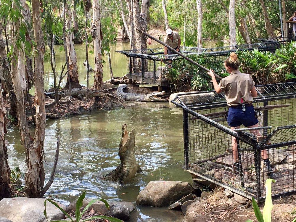 Anna Kooiman AnnaKooiman.com crocodiles cairns tropical queensland australia hartleys crocodile adventures fitness travel lifestyle fashion television