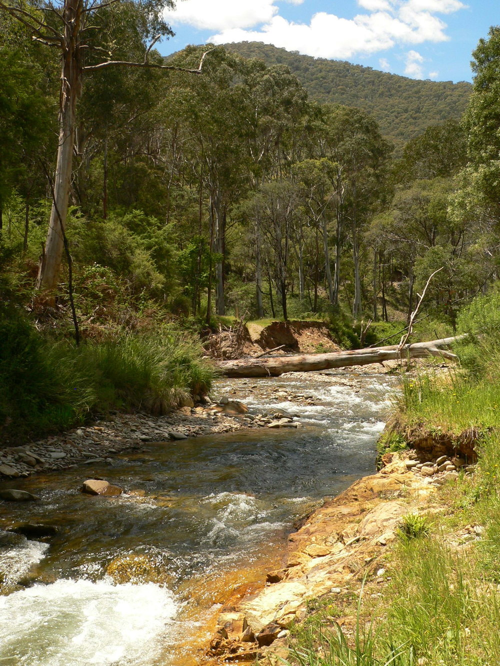 The Ovens River near the site of the Harrietville Chinese Mining Village (photo: Paul Macgregor)