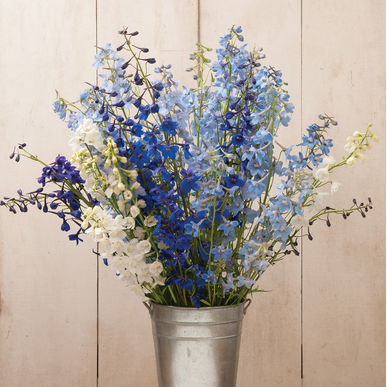 Delphinium Season: Spring