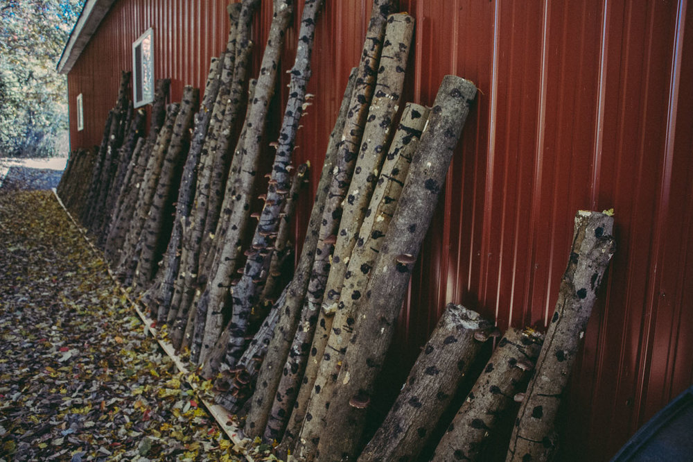 These logs are kept next to our largest barn where they can stay shaded and moist during the season.