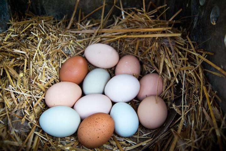 Fresh eggs in abundance.