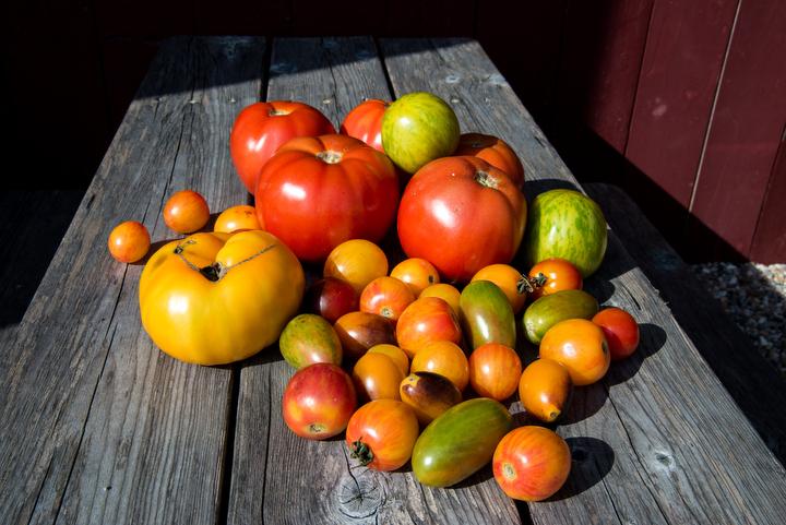 Tomatoes too...