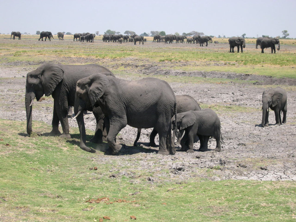 Chobe National Park, Botswana