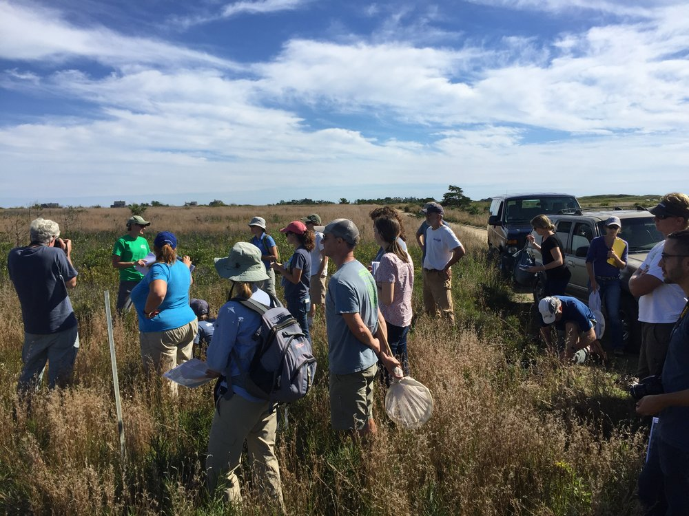 Sandplain grasslands field trip