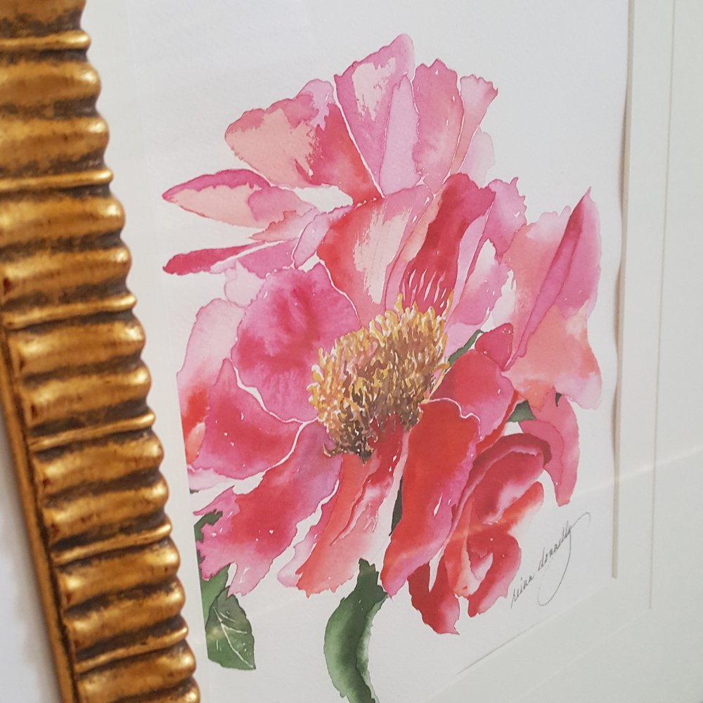 watercolour peony painting by orillia Artist reina donnelly