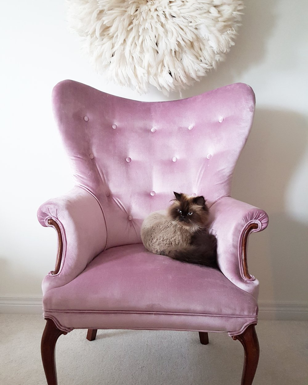 "Antique Wing Chair ""After"" & ""Poppy"" our Seal Point Himalayan"