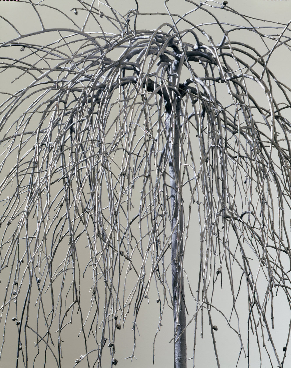 02_pussy_willow_tree.jpg