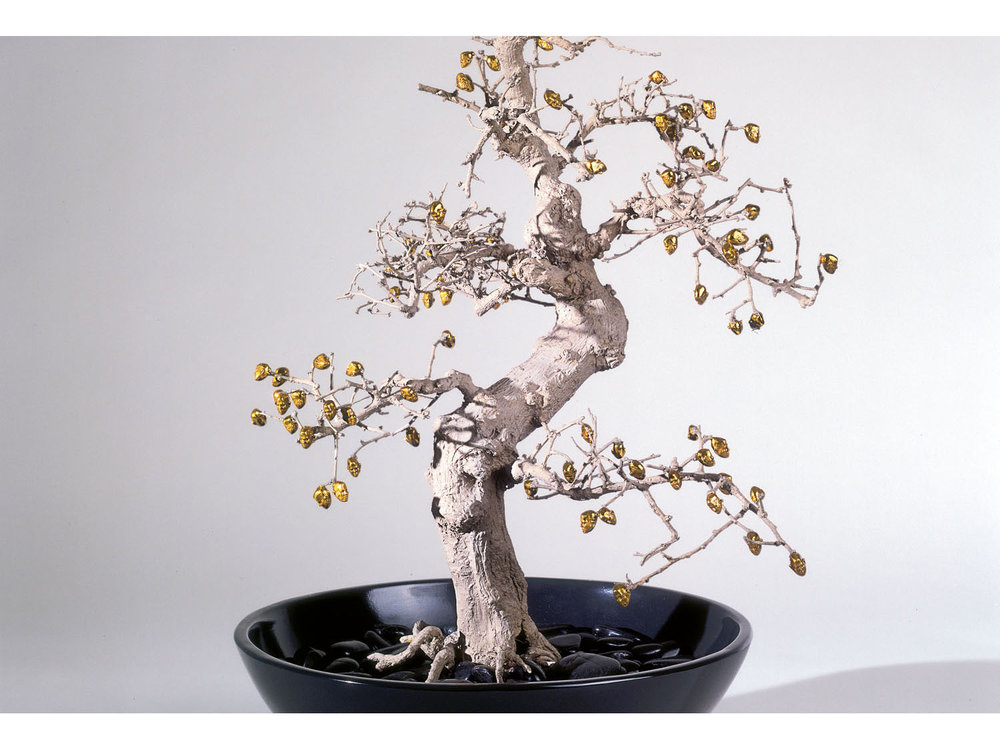 03_chinese_elm_new.jpg