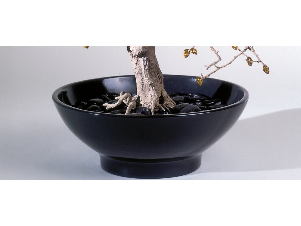 04_chinese_elm_new.jpg