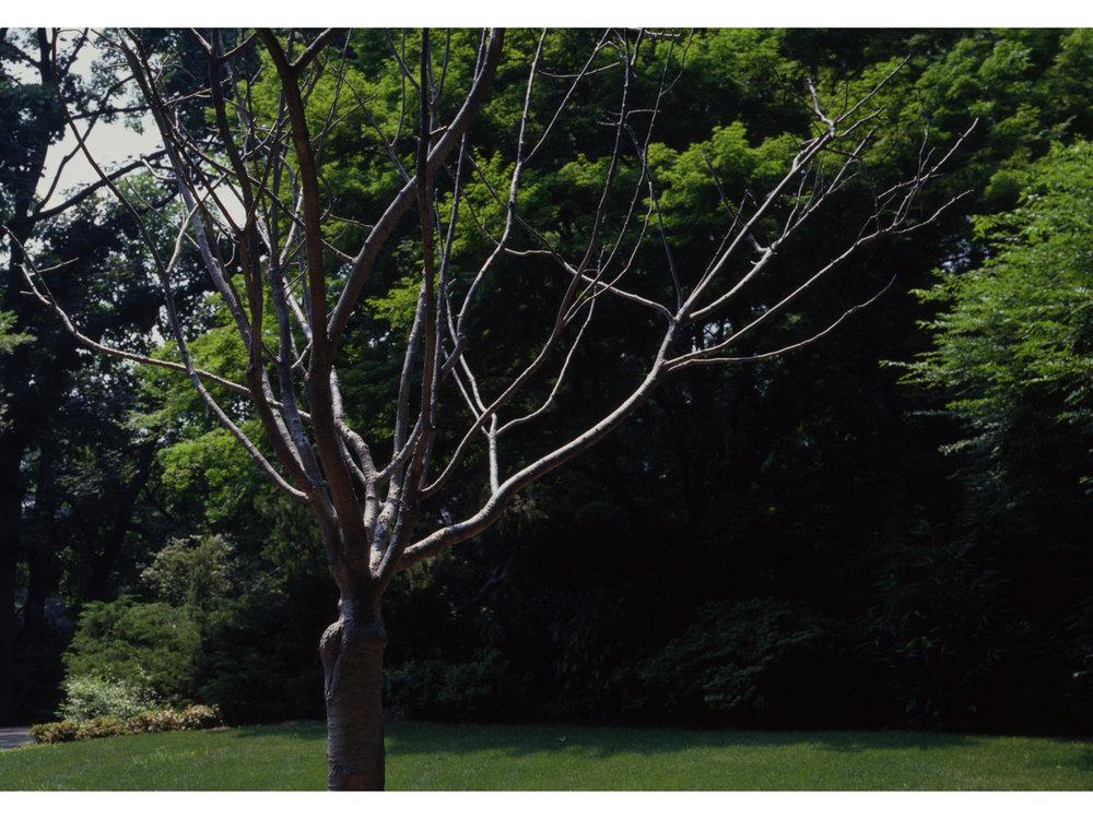 02_tree_new.jpg