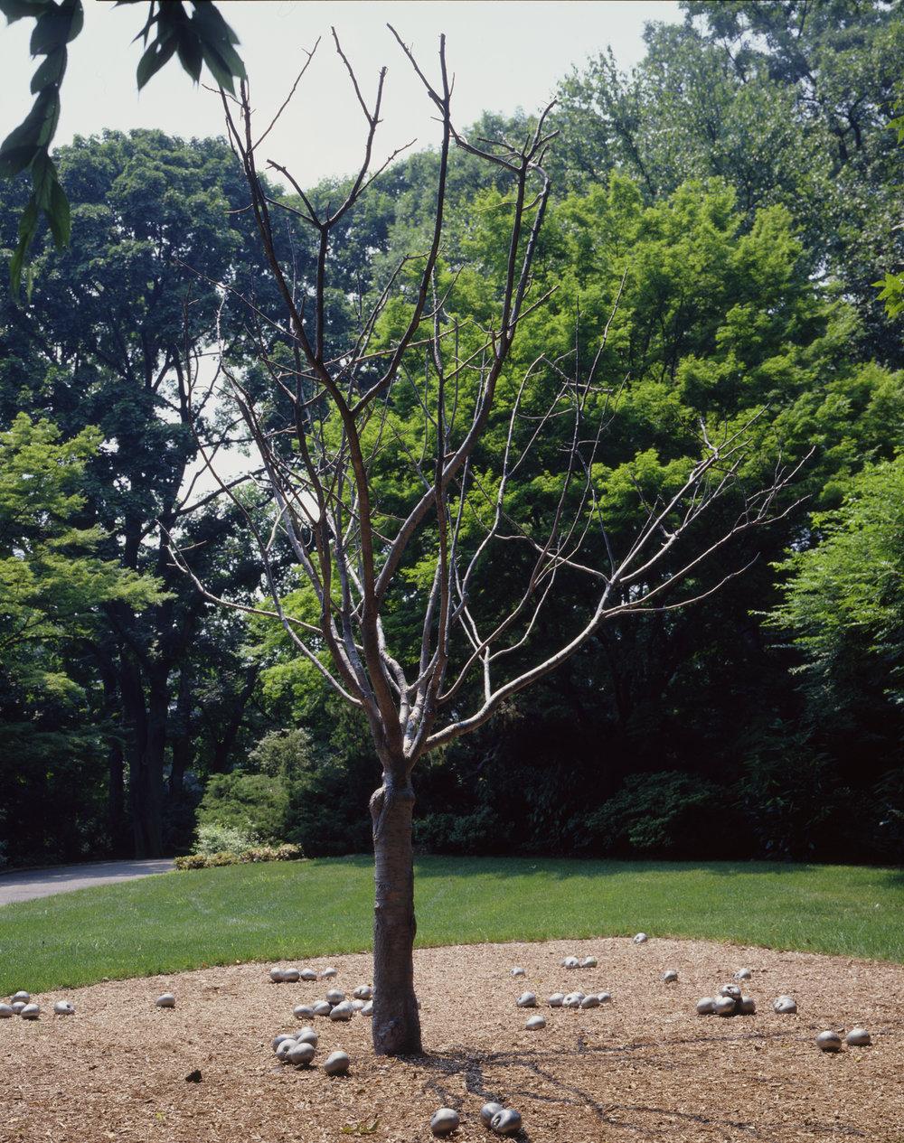 01_tree.jpg