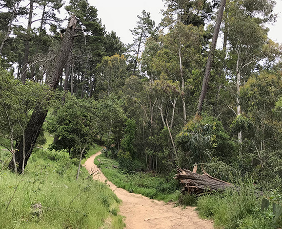 One of my favorite trails in Redwood Regional. No redwoods on this trail, though!