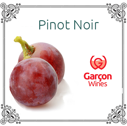 Pinot Noir.jpg