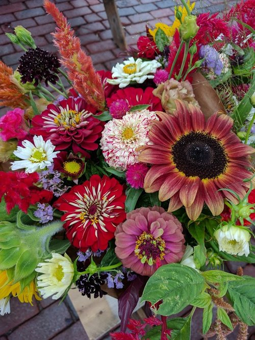 Bluegreen Gardens — Purchase our local flowers: CSA, farmers\' market ...