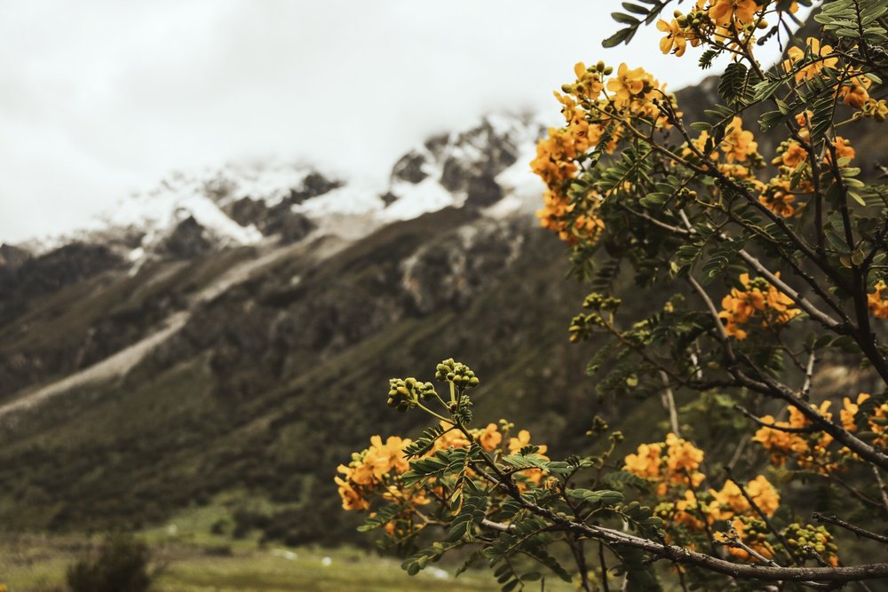Flowers and colors in the Cordillera Blanca