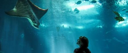 Aquariums & Zoos -