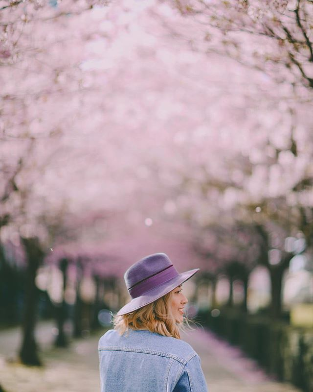 Dreaming of the reappearance of cherry blossoms all over Vancouver.