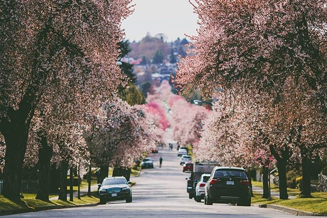 The most beautiful street in all of Vancouver