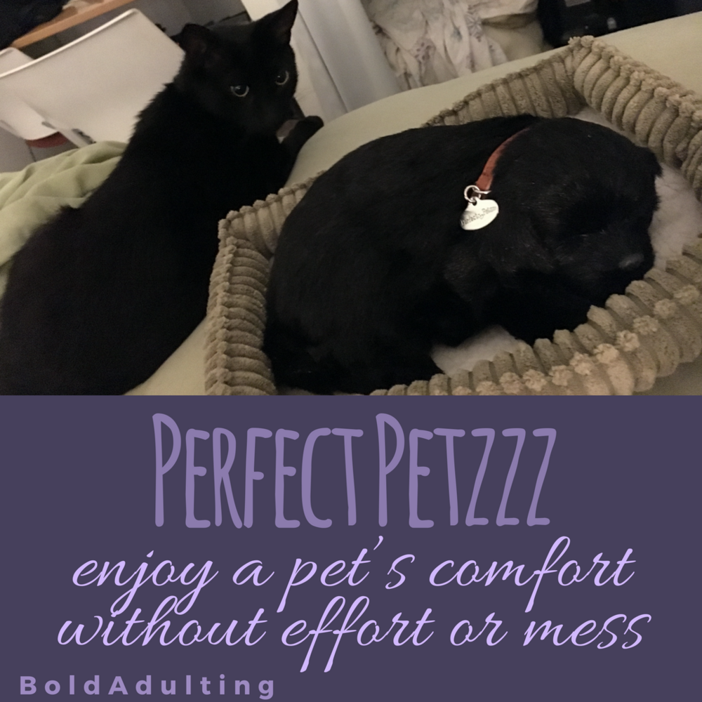 Confidence Cat was nervous when he first saw Catmama's Perfect Petzzz. He didn't realize it was her love for him that made her wish she had a pet she could bring anywhere.