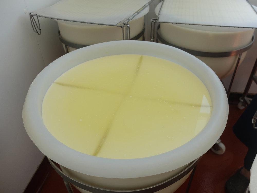St Jude cheesemaking