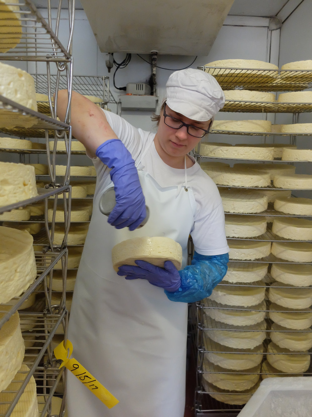 Salting the cheese at Fen Farm Dairy.
