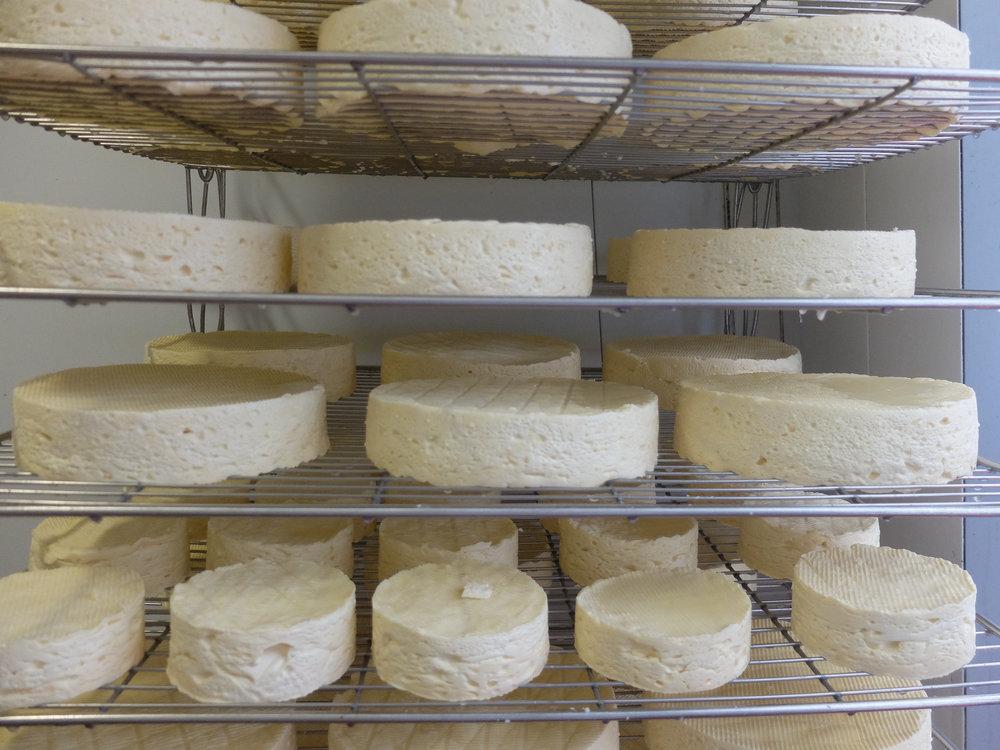 Young Baron Bigod Cheese