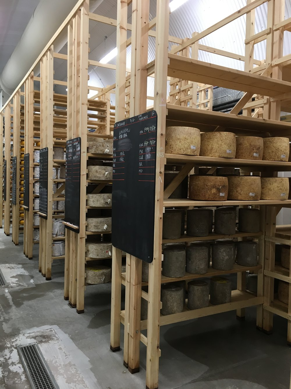 NYD hard cheeses maturing.JPG
