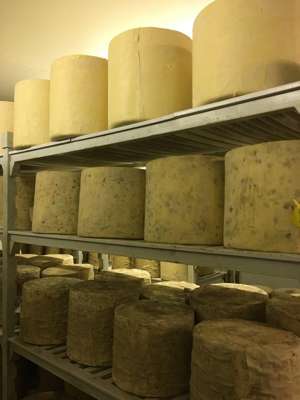 Ferndale maturing cheeses.jpg