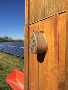 Honeycomb for bees on a farm run by bee the change