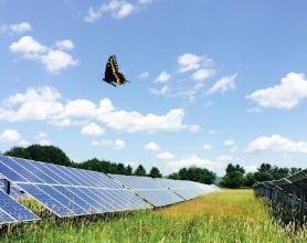 Swallowtail butterfly flies over a field of solar panels on the bee the change farm