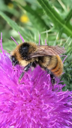 Bee pollinating purple flower