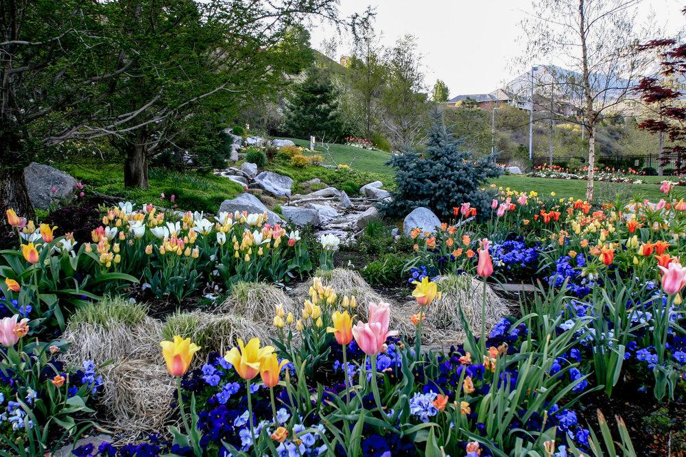 Tuck Landscape 624.jpg