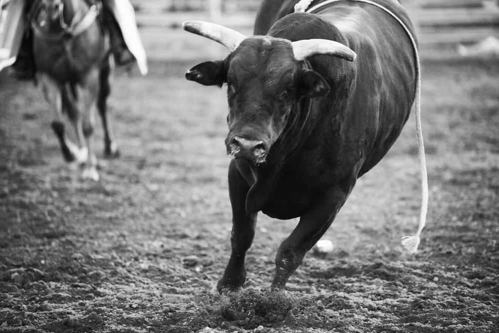 ss 250012x18 rodeo runaway.jpg
