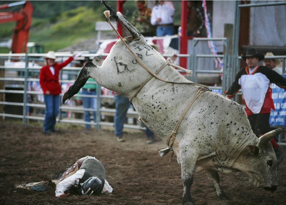 sq2200new bull.jpg