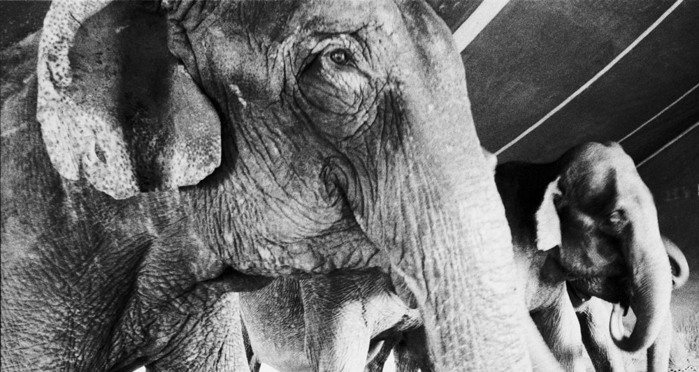 sq 2400 elephants 1.jpg