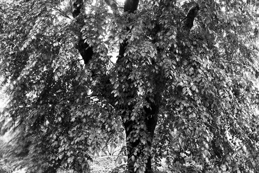 ss nature 3 _DSC6061.jpg