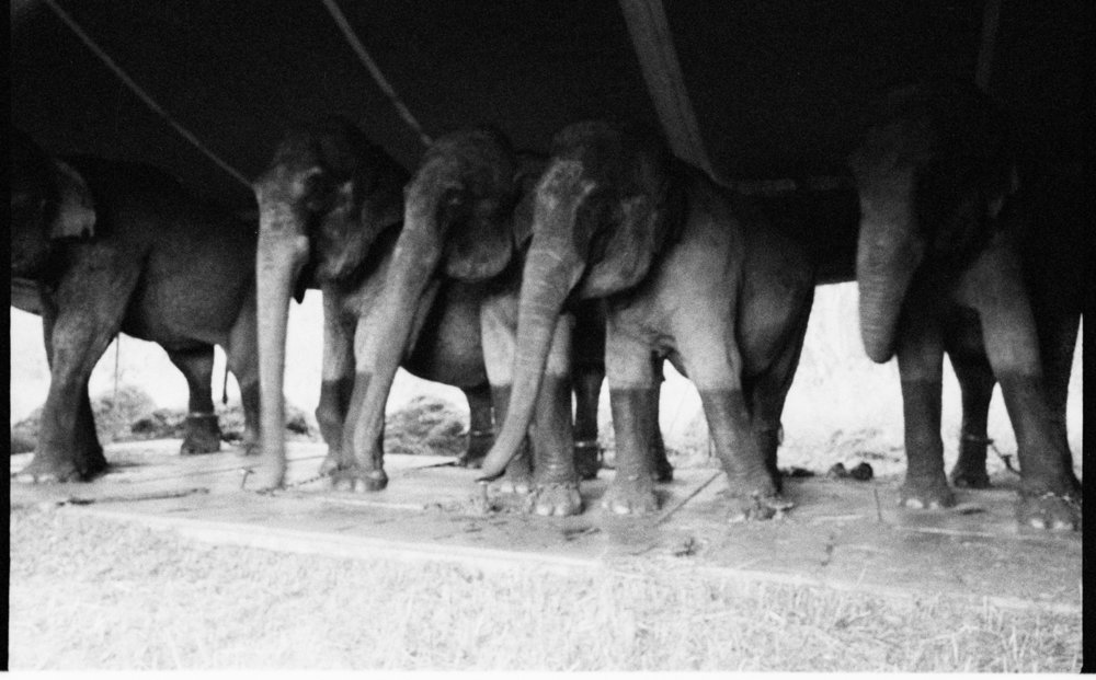 ss circus elephants 16.jpg