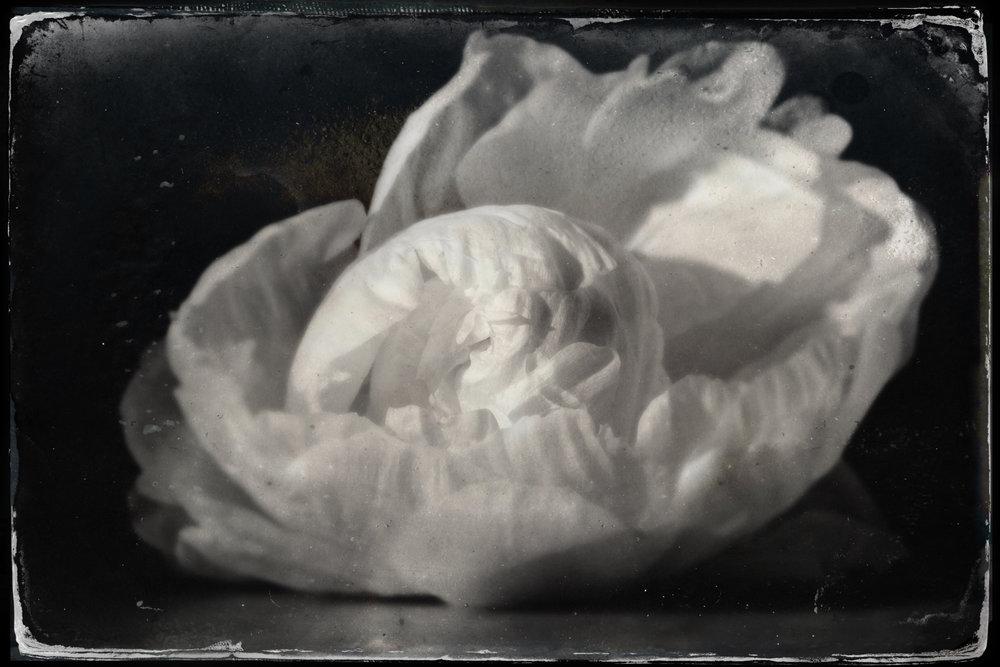 tintype attachment-1.jpeg