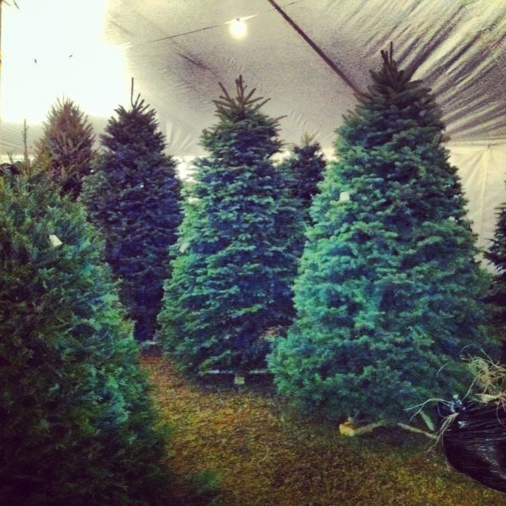 Patton Christmas Trees has an assorted selection.